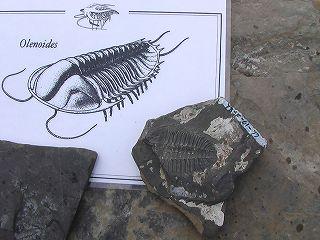 バージェス頁岩の画像 p1_23